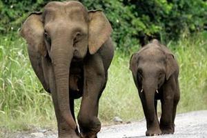 Πενθούν οι ελέφαντες;