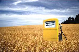 Τα βιοκαύσιμα ανεβάζουν τις τιμές των τροφίμων