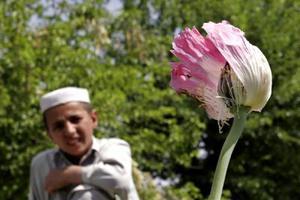 Τρομακτικό το ποσοστό των εθισμένων Αφγανών στα ναρκωτικά