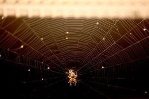Ο ιστός της αράχνης ως «μοντέλο» στην κατασκευή κτιρίων