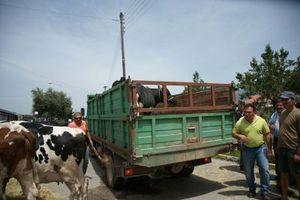 Πανελλαδικό συλλαλητήριο κτηνοτρόφων