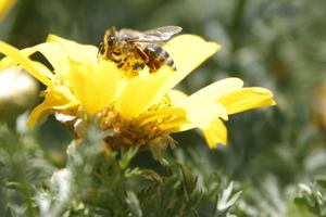 Γιατί πεθαίνουν οι μέλισσες;