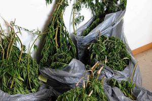 Αύξηση χρήσης ναρκωτικών στην Κύπρο