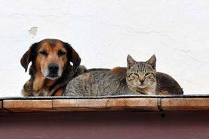 Το κάπνισμα βλάπτει σοβαρά… σκύλους και γάτες