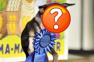 Διαγωνισμός για την χειρότερη… σκυλόφατσα