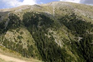 Απαγορεύτηκε η κυκλοφορία στα δασικά συμπλέγματα της Λακωνίας