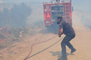 Σε μήκος 1,5 χιλιομέτρων εκτείνεται η πυρκαγιά στις Αφίδνες