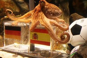 To χταπόδι λέει «Ισπανία»