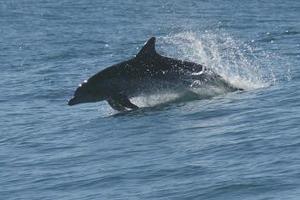 Δελφίνι βρέθηκε νεκρό σε παραλία