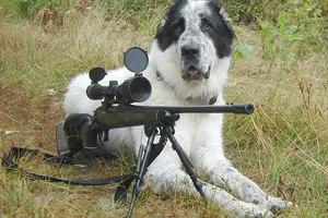 Σκύλος πυροβόλησε άνθρωπο