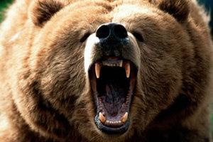 Επίθεση 64χρονης σε αρκούδα