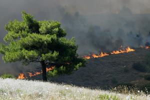 Πυρκαγιά στην Αχαΐα