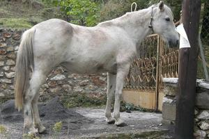 Μοιραία σύγκρουση 23χρονου με άλογο στην Κάρυστο