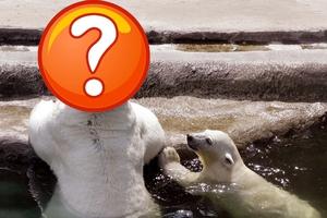 Τι έβαλε στο κεφάλι της η πολική αρκούδα;
