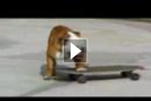 Ένας σκύλος γεννημένος για extreme sports
