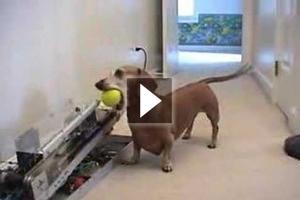 Όταν ο σκύλος έχει κέφια και… μυαλό!