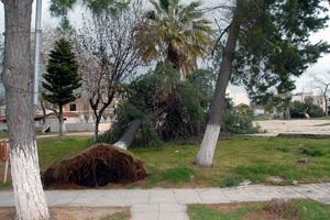 Δεκάδες κλήσεις για ξεριζωμένα δέντρα στην Αττική