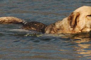 Έχετε σκύλο κολυμβητή;
