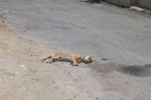 Δηλητηρίασαν κουτάβι στην Κρήτη