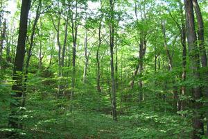 Απαγόρευση κυκλοφορίας σε δάση της Αργολίδας υπό το φόβο πυρκαγιάς