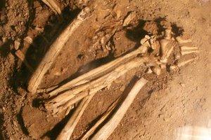 Τα αρχαιότερα απωλιθωμένα οστά σκύλου