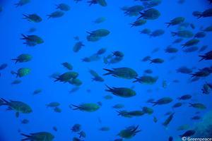 Άγνοια κινδύνου για τα ψάρια στα όξινα νερά