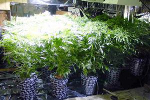 Καλλιεργούσαν φυτό ινδικής κάνναβης μέσα στις φυλακές Γρεβενών