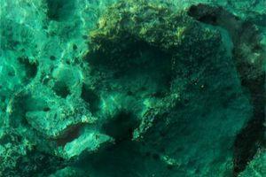 Οι ωκεανοί και το πλαγκτόν θα μπορούσαν να χρησιμοποιηθούν ως «αποθήκες»