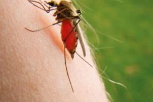 Η «επιδρομή» των εντόμων
