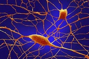 Ξεκίνησαν από το δέρμα, κατέληξαν στον εγκέφαλο