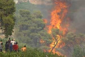 Πυρκαγιά στη Λακωνία