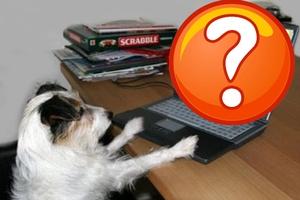 Εσείς ξέρετε τι κάνει ο σκύλος σας όταν λείπετε;