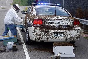 Αστυνομικός δέχθηκε επίθεση από μέλισσες