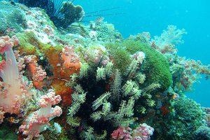 Παγκόσμιο SOS της WWF για τους ωκεανούς