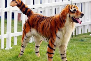 Το τιγρόσκυλο (και όχι μόνο)