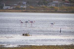 Έκκληση για απαγόρευση του κυνηγιού στον Αμβρακικό