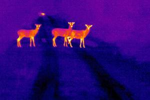 Φωσφοριζέ ζώα αναζητούν τροφή τη νύχτα