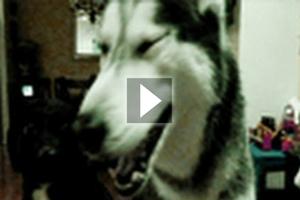 Ο σκύλος που μιλάει
