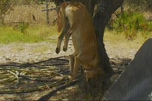 Κρέμασαν σκύλο σε δέντρο στην Κω