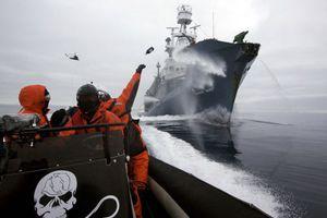 Το Τόκιο ξεκινά το κυνήγι φαλαινών