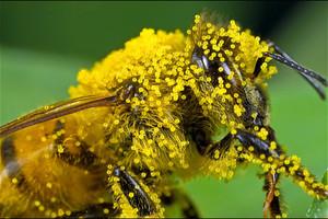 Ένας κόσμος χωρίς μέλισσες;
