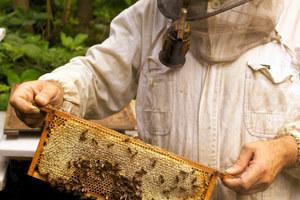 Διημερίδα με θέμα «Δάση και Μελισσοκομία»