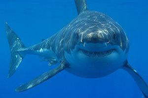 Πιάστηκαν οι καρχαρίες που επιτέθηκαν σε τουρίστες