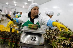 Τα σπαράγγια «απειλούν» το Περού