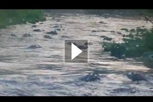 Σήμερα έχει υπερβολική κίνηση στο ποτάμι...