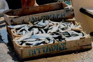 Το Αιγαίο χάνει τα ψάρια του