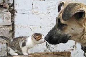 Σαν τον σκύλο με τη γάτα