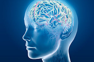 «Χαρτογραφήθηκε» η πολυπλοκότητα του εγκεφάλου