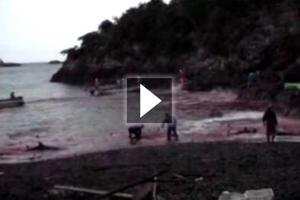 Παγκόσμια κινητοποίηση για τη «σφαγή» δελφινιών