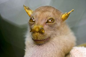 Batman, αυτή είναι νυχτερίδα!